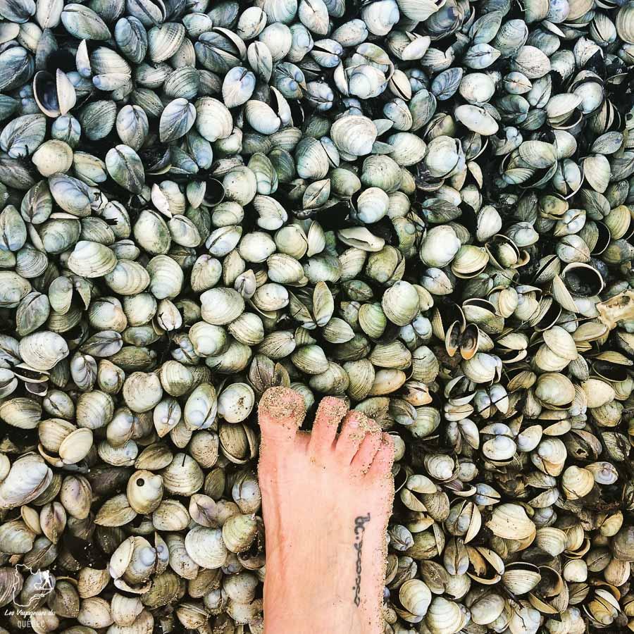 Randonnée à marée basse sur Abel Tasman dans mon article La randonnée en Nouvelle-Zélande: 5 randonnées à faire sur l'île du Sud en Nouvelle-Zélande (de 1 à 4 jours) #nouvellezelande #oceanie #randonnee #trek #voyage #trekking #nature #abeltasman #iledusud