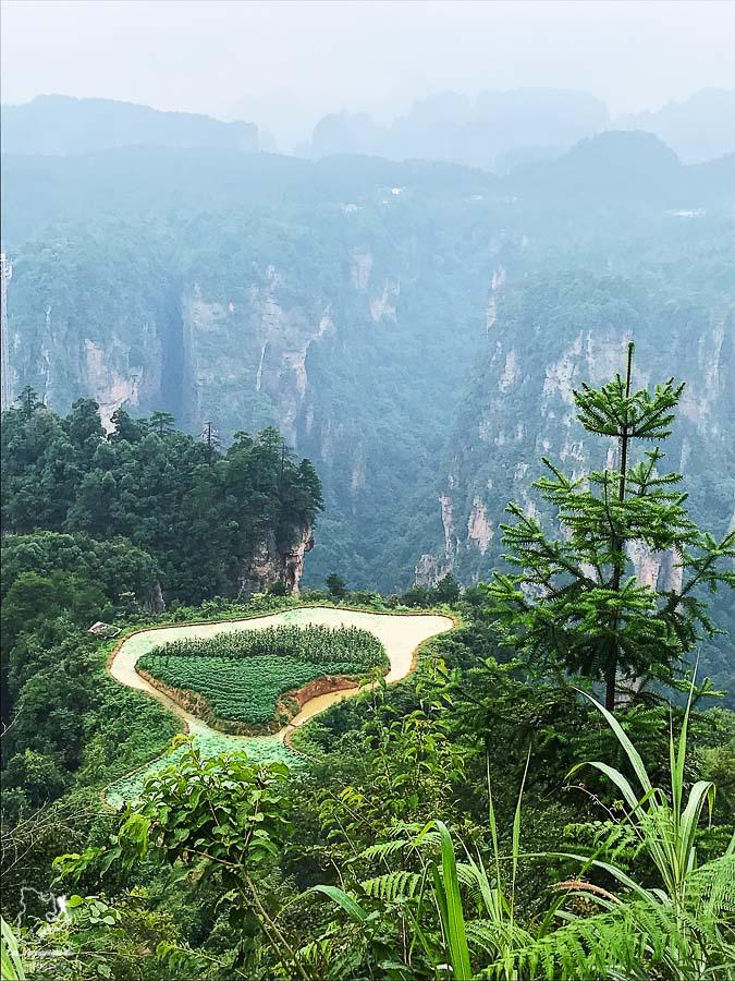 Fields in the Sky au parc de Zhangjiajie dans notre article Parc national de Zhangjiajie en Chine : Petit guide pour visiter ce parc #zhangjiajie #chine #avatar #asie #voyage #trek