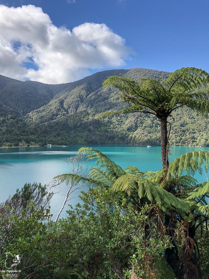 Les fameuses fougères lors de la randonnée sur la Queen Charlotte dans mon article La randonnée en Nouvelle-Zélande: 5 randonnées à faire sur l'île du Sud en Nouvelle-Zélande (de 1 à 4 jours) #nouvellezelande #oceanie #randonnee #trek #voyage #trekking #nature #queencharlotte