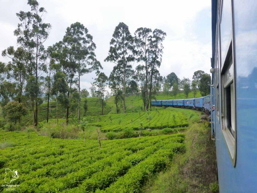 Train dans les plantations de thé au Sri Lanka dans notre article Où partir seule en tant que femme : 12 destinations pour un voyage en solo #voyage #femme #voyagersolo #srilanka