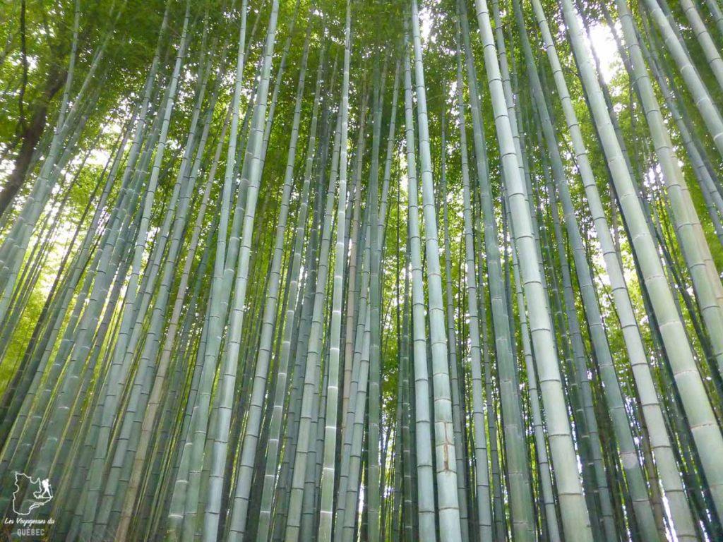 Forêt de bambou à Kyoto au Japon dans notre article Où partir seule en tant que femme : 12 destinations pour un voyage en solo #voyage #femme #voyagersolo #japon