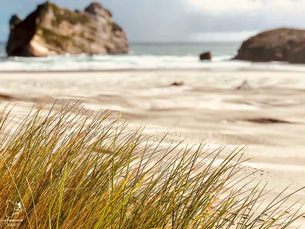 Wharariki beach à Golden Bay en Nouvelle-Zélande dans notre article Road trip en Nouvelle-Zélande : Mes 5 semaines à vivre sur la route #nouvellezelande #roadtrip #oceanie #voyage
