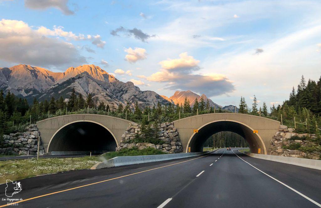 Les ponts verts pour les ours dans les Rocheuses canadiennes dans notre article Rocheuses canadiennes : road trip de 3 jours entre Banff et Jasper #rocheuses #rocheusescanadiennes #ouestcanadien #canada #voyage #montagne #alberta #roadtrip