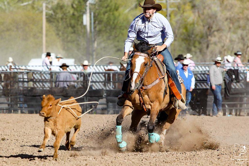Capture de veau au lasso lors du rodéo de Calgary dans notre article Le Stampede de Calgary : Visiter Calgary au Canada pendant le grand rodéo #stampede #rodeo #calgary #alberta #canada #festival