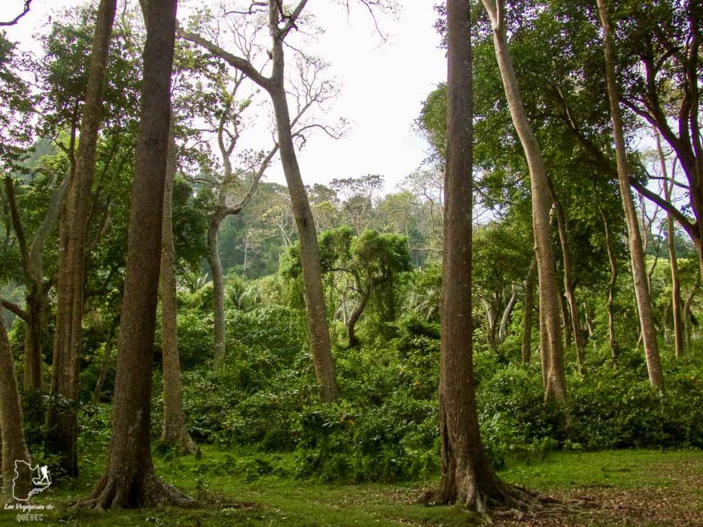 La nature sur Havelock aux îles Andaman dans notre article Havelock aux îles Andaman en Inde : Évasion parfaite sur une île indienne #havelock #ile #andaman #paradis #inde #voyage