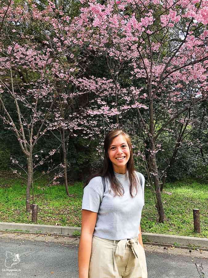 Saison des floraisons au Japon dans notre article Visiter le Japon : Mes trucs et astuces pour un voyage au Japon réussi #japon #asie #voyage #printemps