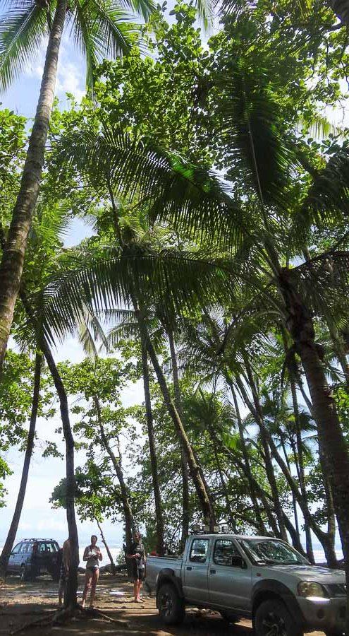 Parc national Marino Ballena près d'Uvita au Costa Rica dans notre article Le Cerro Chirripo au Costa Rica : Mon ascension du Mont Chirripo #costarica #ameriquecentrale #voyage #volcan #randonnee #chirripo #uvita