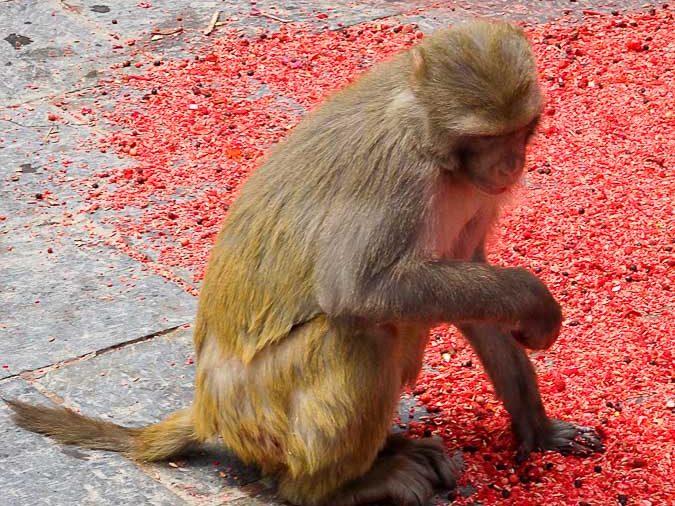 Visiter Katmandou et le Monkey temple dans notre article Que faire à Katmandou au Népal : Mes incontournables à visiter #katmandou #nepal #asie #incontournables