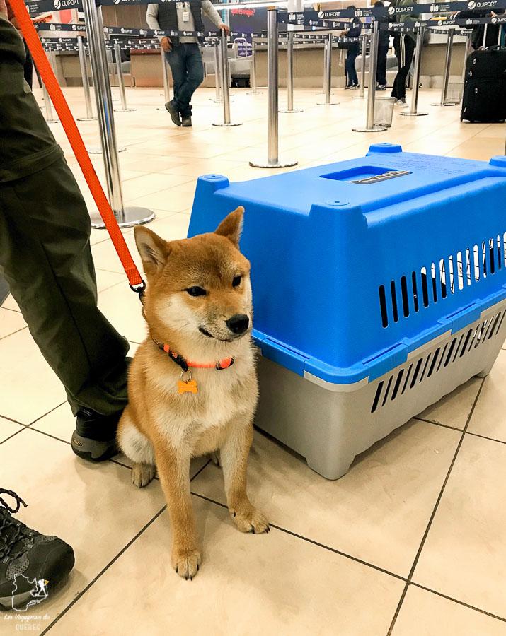 À l'aéroport pour ramener mon chien au Canada dans notre article sur Adopter un chien en voyage : Procédures pour ramener un chien au Canada #chien #adopter #etranger #voyage #procedure