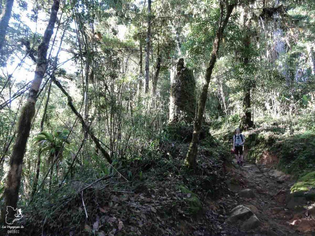 Végétation luxuriante du Cerro Chirripo au Costa Rica dans notre article Le Cerro Chirripo au Costa Rica : Mon ascension du Mont Chirripo #costarica #ameriquecentrale #voyage #volcan #randonnee #chirripo