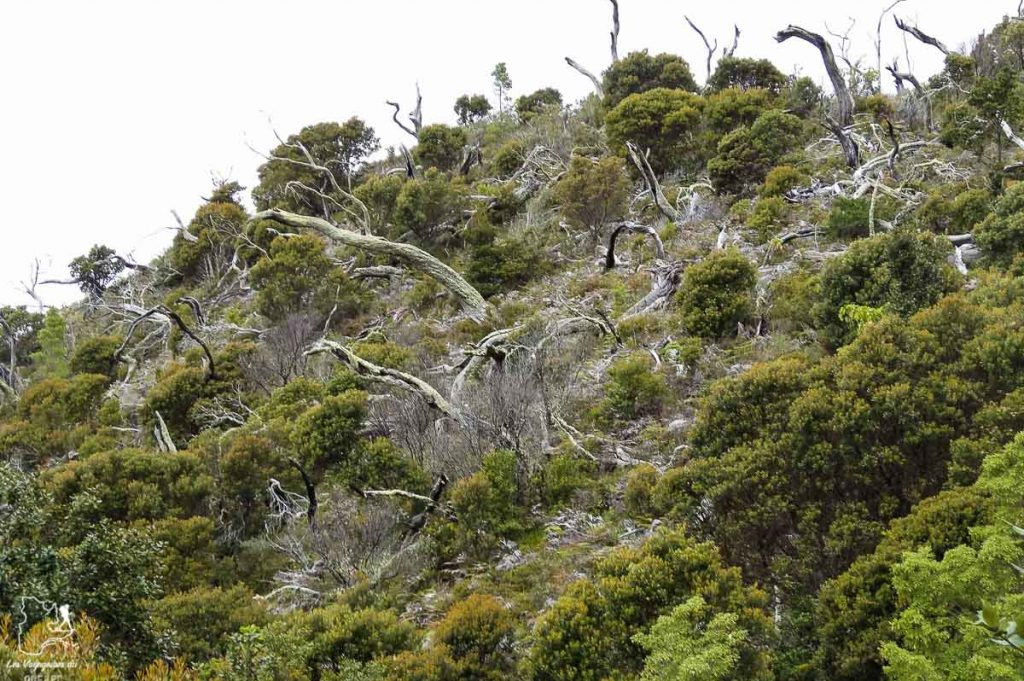 Randonnée au Cerro Chirripo au Costa Rica dans notre article Le Cerro Chirripo au Costa Rica : Mon ascension du Mont Chirripo #costarica #ameriquecentrale #voyage #volcan #randonnee #chirripo