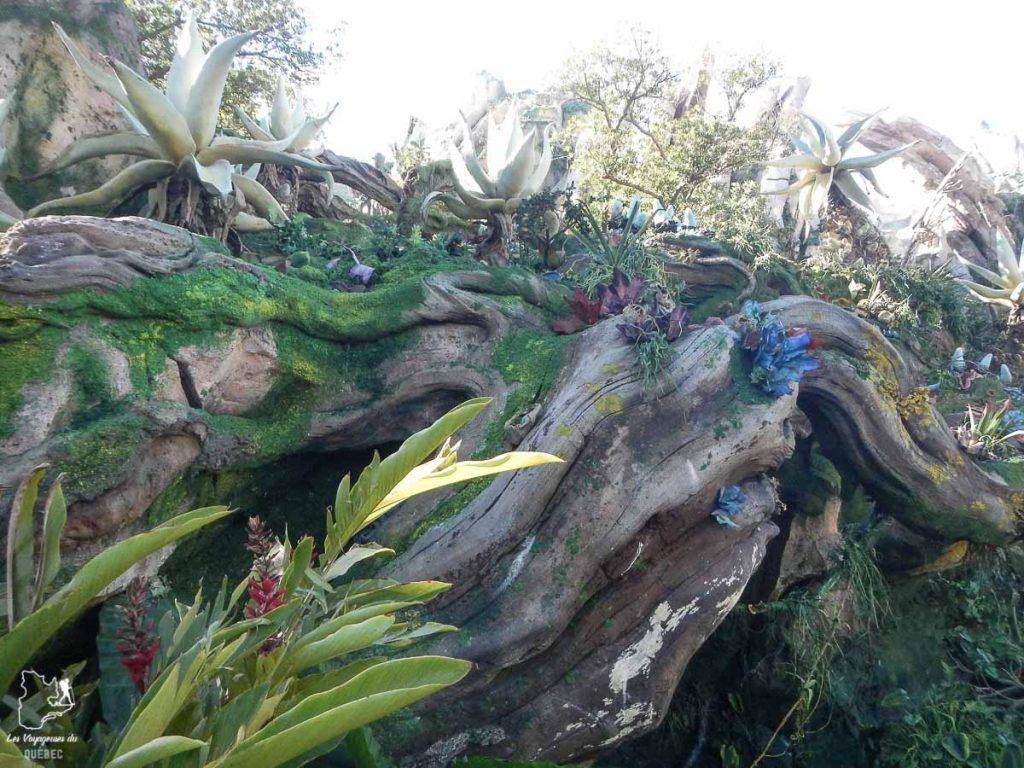 Univers Avatar au Disney's Animal Kingdom, un parc d'attractions en Floride dans notre article Walt Disney World à Orlando : Le meilleur de ce parc d'attractions en Floride #waltdisney #waltdisneyworld #floride #disney #parcattraction #orlando