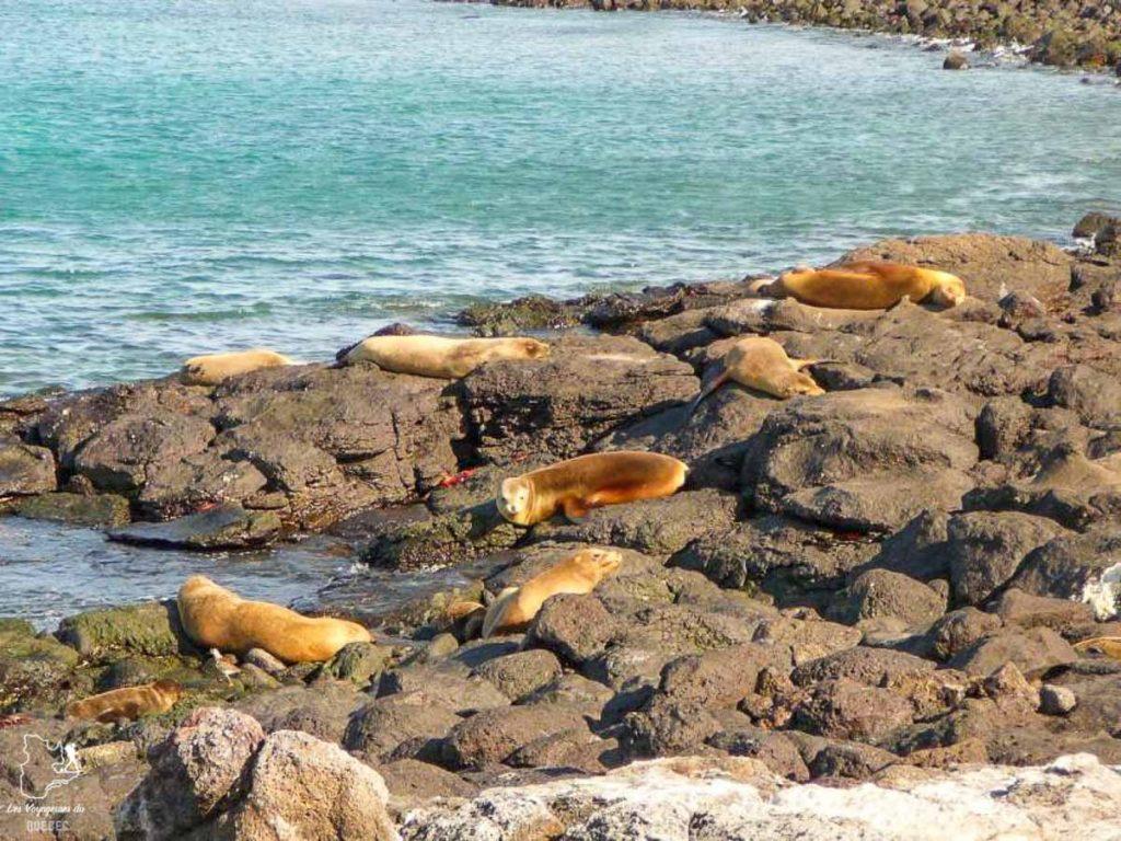 Voyage de plongée aux Galapagos en Équateur dans notre article Plongée sous-marine : 20 destinations de plongée à travers le monde #plongee #plongeesousmarine #voyage #destination