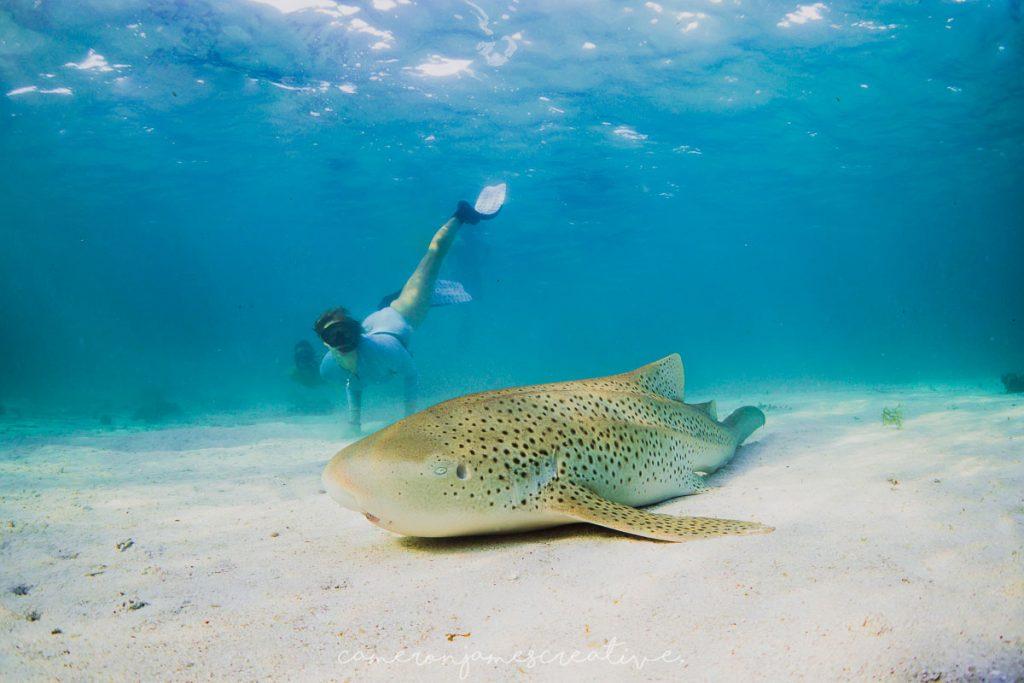 Voyage de plongée à Ningaloo en Australie dans notre article Plongée sous-marine : 20 destinations de plongée à travers le monde #plongee #plongeesousmarine #voyage #destination
