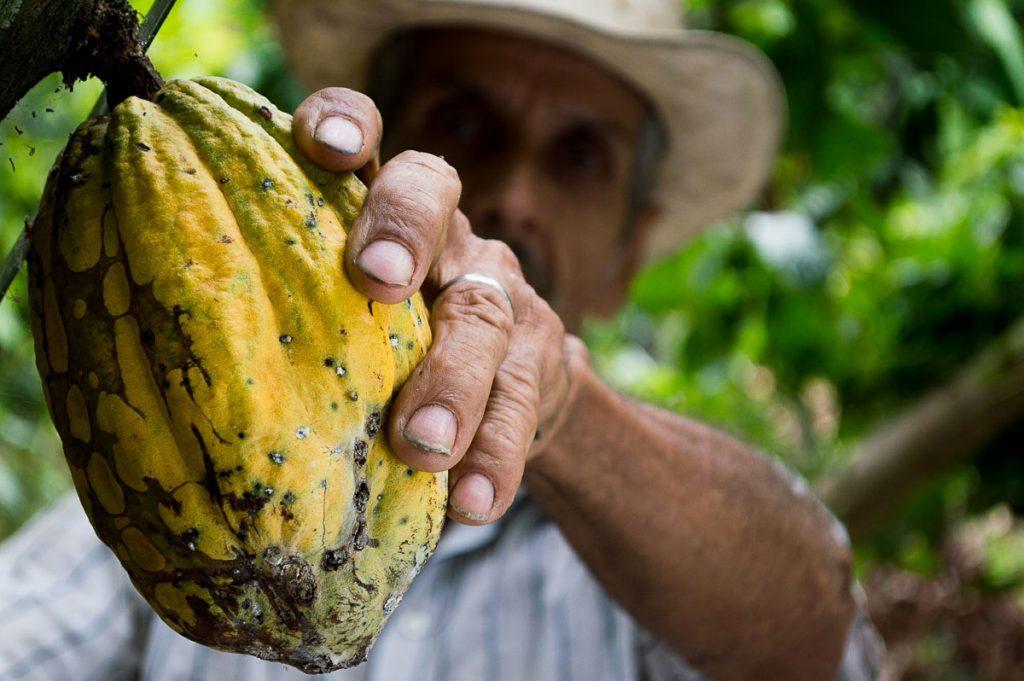 Visite d'une ferme de chocolat à Mindo en Équateur dans notre article Mindo en Équateur : Que faire et voir dans ce lieu à la faune et la flore unique #equateur #mindo #ameriquedusud #voyage