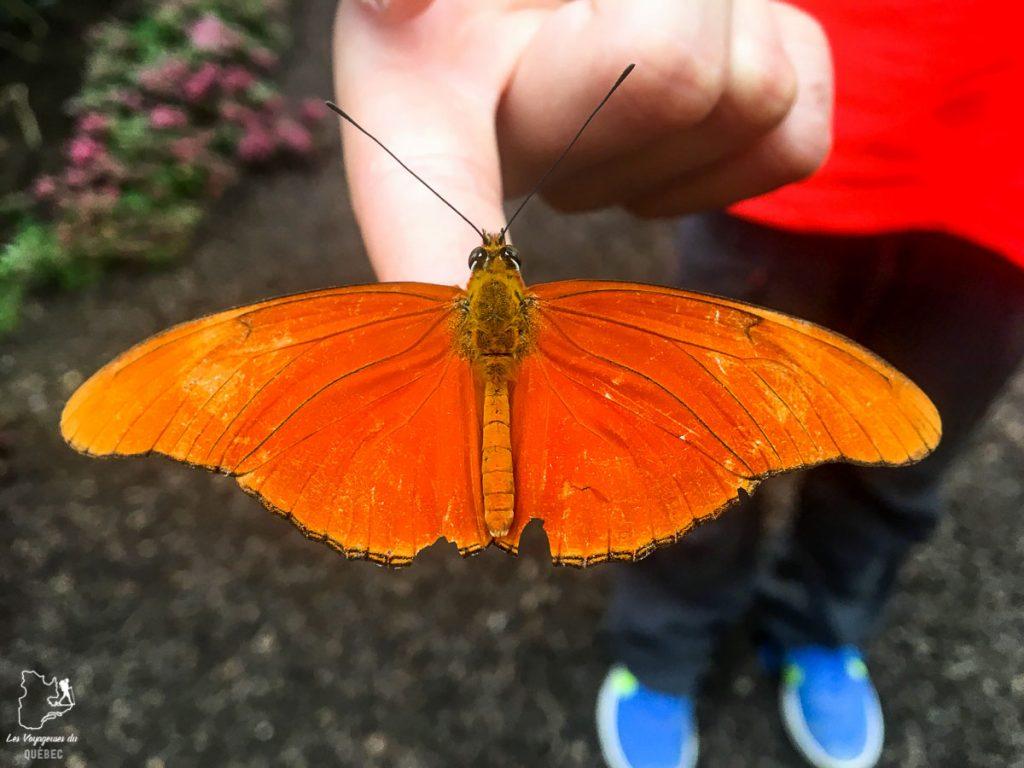 La ferme de papillons à Mindo en Équateur dans notre article Mindo en Équateur : Que faire et voir dans ce lieu à la faune et la flore unique #equateur #mindo #ameriquedusud #voyage