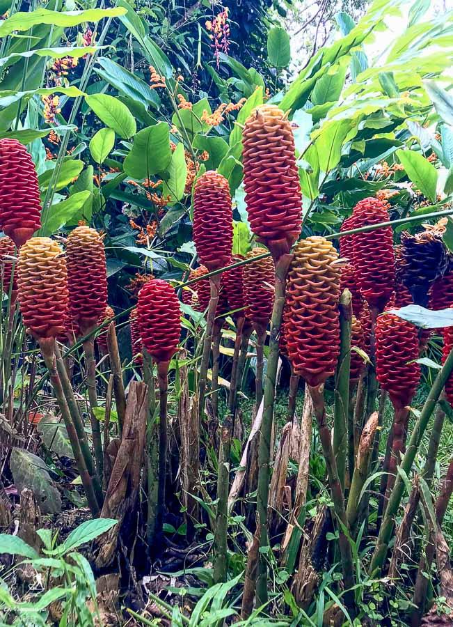 Jardin fleuri du Real Mindo à Mindo en Équateur dans notre article Mindo en Équateur : Que faire et voir dans ce lieu à la faune et la flore unique #equateur #mindo #ameriquedusud #voyage