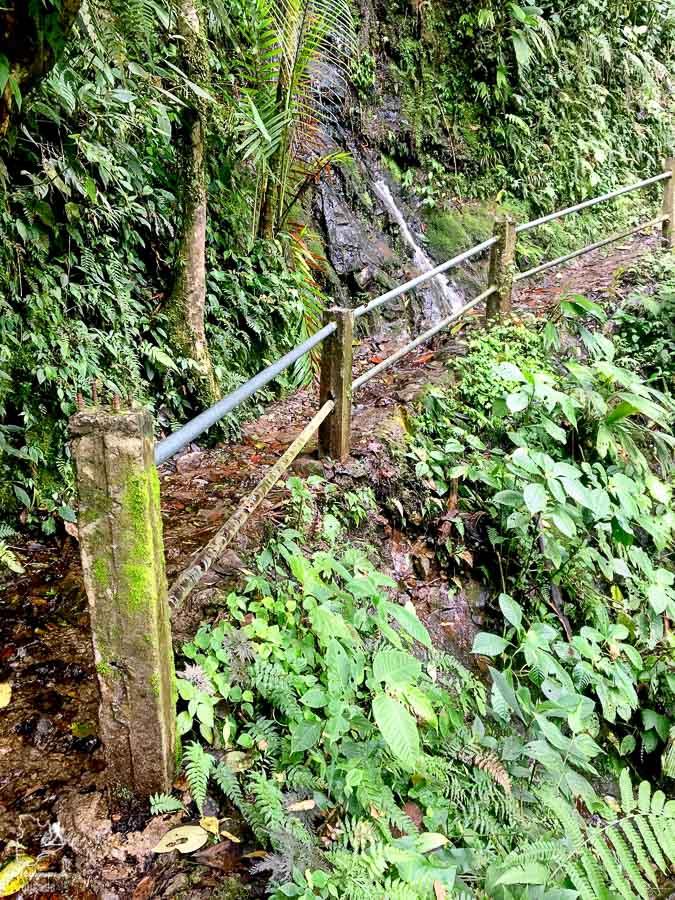 La flore généreuse de Mindo en Équateur dans notre article Mindo en Équateur : Que faire et voir dans ce lieu à la faune et la flore unique #equateur #mindo #ameriquedusud #voyage