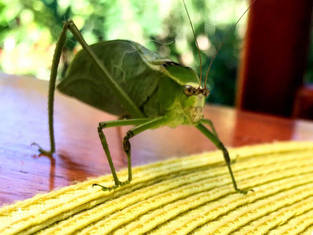 Insectes à Mindo en Équateur dans notre article Mindo en Équateur : Que faire et voir dans ce lieu à la faune et la flore unique #equateur #mindo #ameriquedusud #voyage