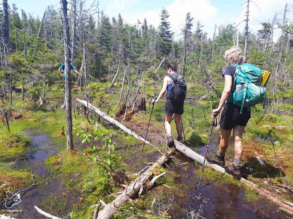 Traverser un marécage en randonnée dans les Adirondacks dans notre article Devenir un Adirondack 46er : Faire l'ascension des 46 plus hautes montagnes des Adirondacks #adirondack #adirondacks #46ers #46er #ADK46er #montagnes #usa #randonnee
