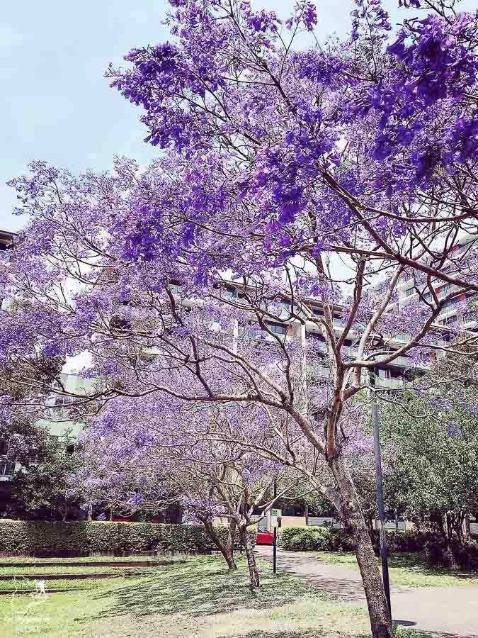 Quartier Surry Hills de Sydney dans l'article Visiter Sydney en Australie : Que faire à Sydney et dans les environs #sydney #australie #voyage #oceanie