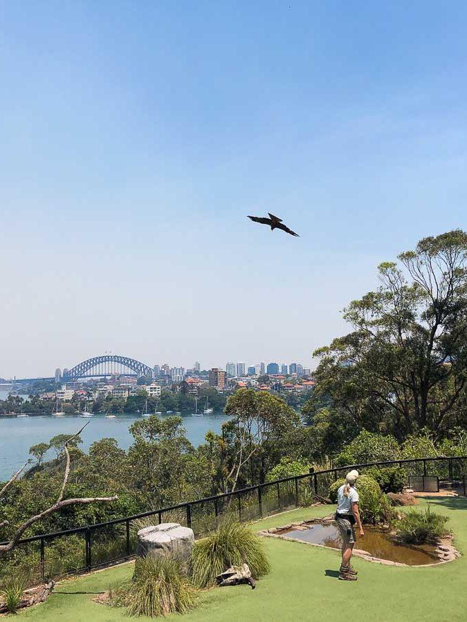Taronga zoo près de Sydney dans l'article Visiter Sydney en Australie : Que faire à Sydney et dans les environs #sydney #australie #voyage #oceanie