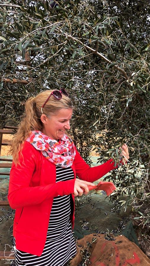 Faire la cueillette d'olives à Nabeul en Tunisie dans notre article Visiter la Tunisie : Comment faire un voyage en Tunisie autrement #tunisie #afrique #voyage #Nabeul