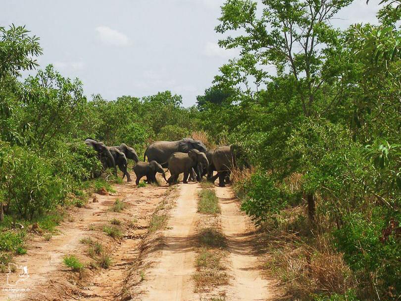 Voir la faune lors d'un safari à Nazinga dans notre article Mon voyage au Burkina Faso : Que faire et visiter en 10 incontournables #burkinafaso #afrique #voyage